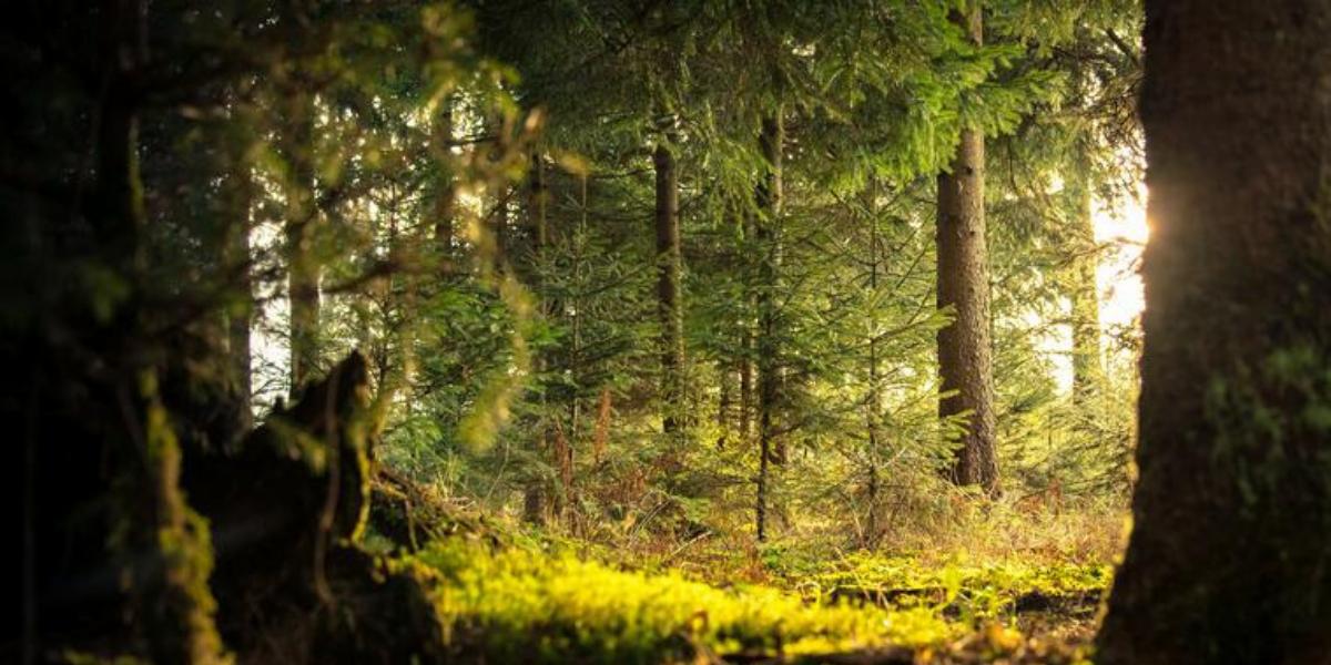 Conférence secteur bois 23 septembre 2019 : La valorisation du bois dans tous ses états !